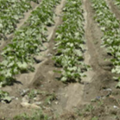 Field Latina in WorkForce thumbnail